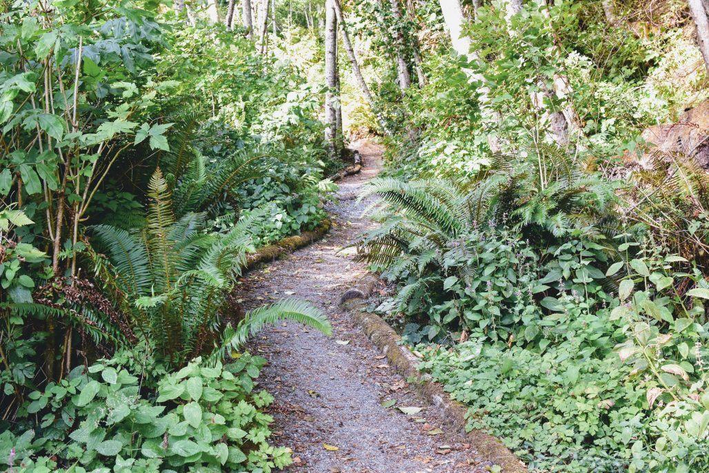 Path to the beach through the rain forest
