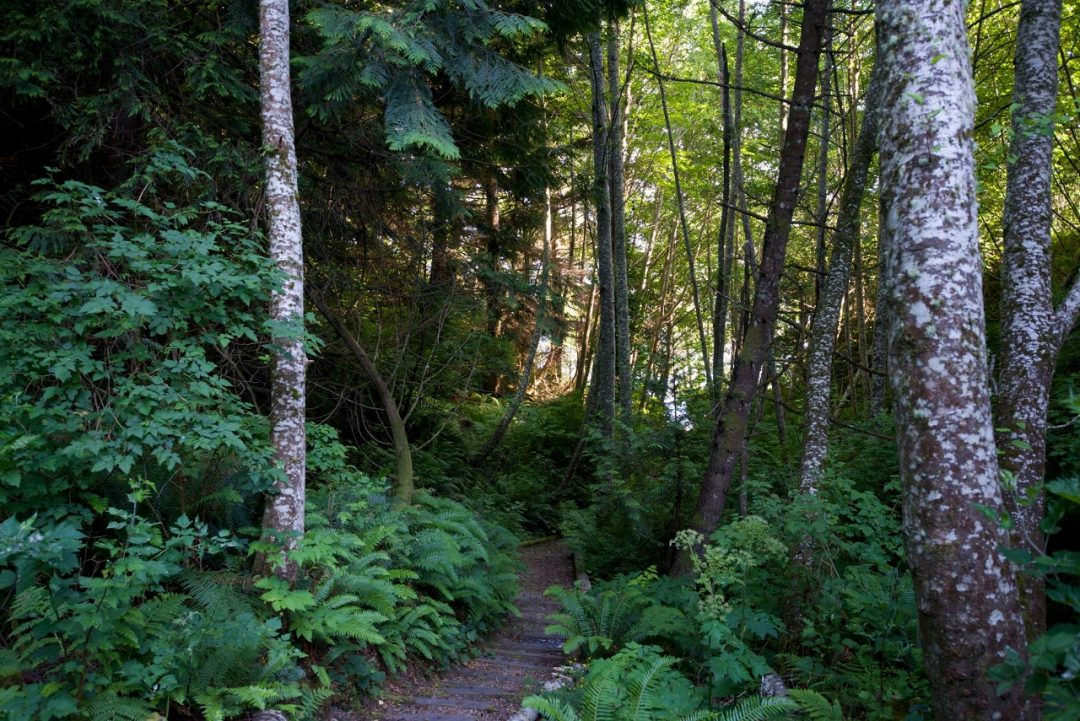 Lush forested path to private beach